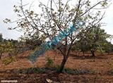 KOCAOGLU gayrimenkul oguzeli gursuda mukemmel arazi