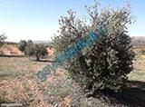 KOCAOGLU gayrimenkul oguzelinde yatirimlik mukemmel arazi