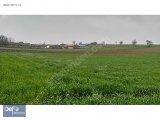 Yenişehir Mahmudiye'de Köye 500 metre Mesafede Satılık Tarla